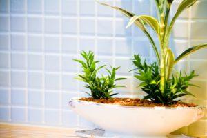 浴室の観葉植物