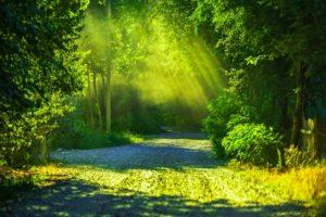 緑の生い茂る場所